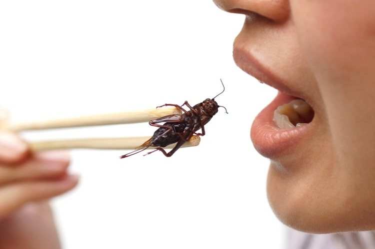 Eating cricket chopsticks Shutterstock Insects Strong Fit Well