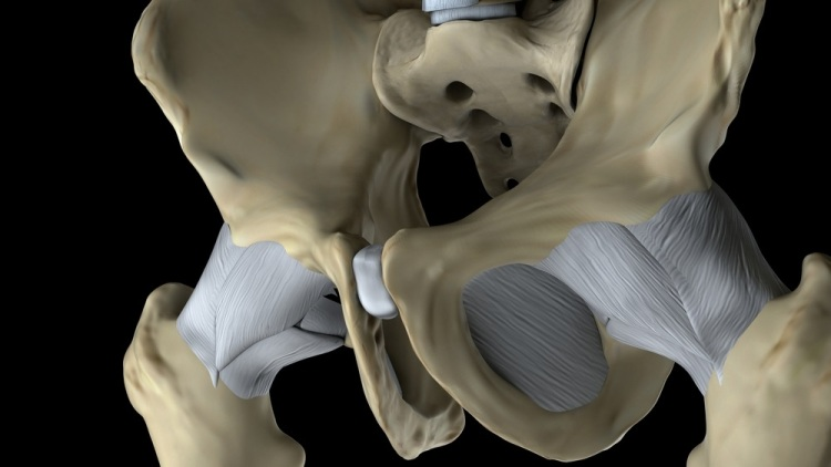 Pubic bone Shutterstock Strong Fit Well